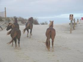 north beach, Assateague Is.