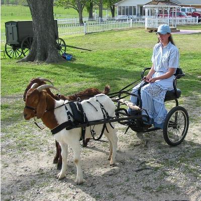 Image result for goat cart images