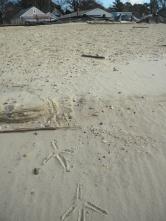 heron tracks to the sea