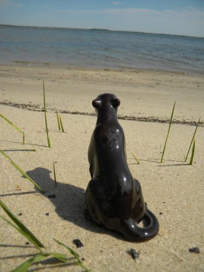 Bagheera on the beach