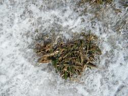 snow, grass