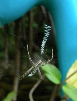 teeny spider