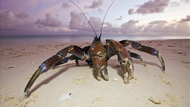 Image result for tamatoa images